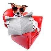 30854009 chien de lire le journal sur un canap rouge dr le de fantaisie de repos et de d tente