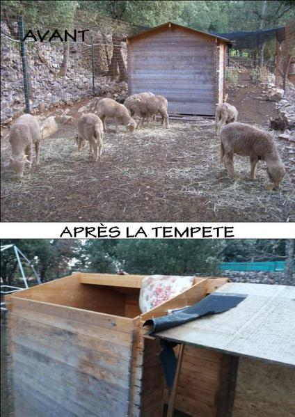 Abri agneaux avant apres