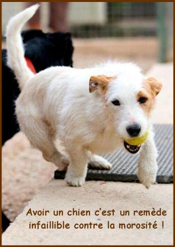 Adoption chien 2