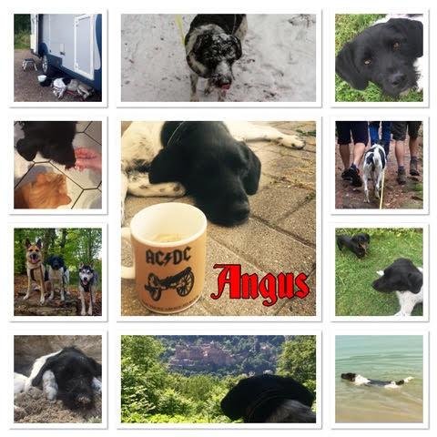 Angus5
