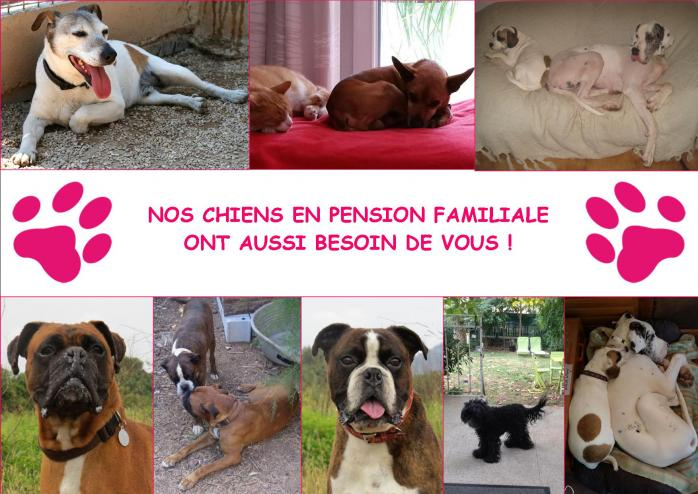 Chiens en pension