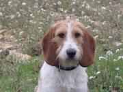 Droopy tete
