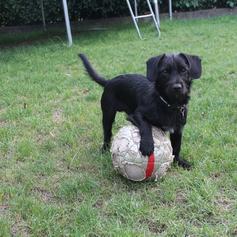 Milou footballeur 2