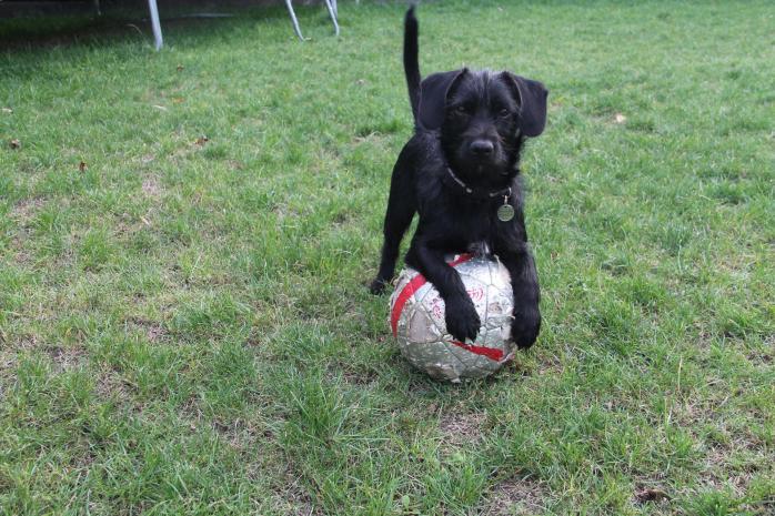Milou footballeur 3