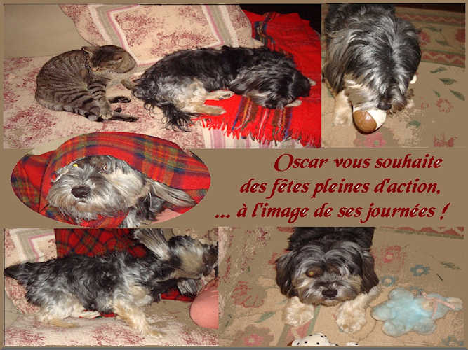 Oscar noel