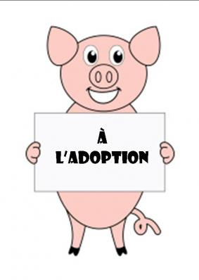 Pancarte a l adoption 1