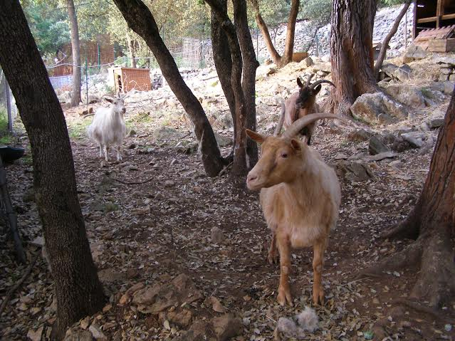 Savane bambi et chouquette biquettes