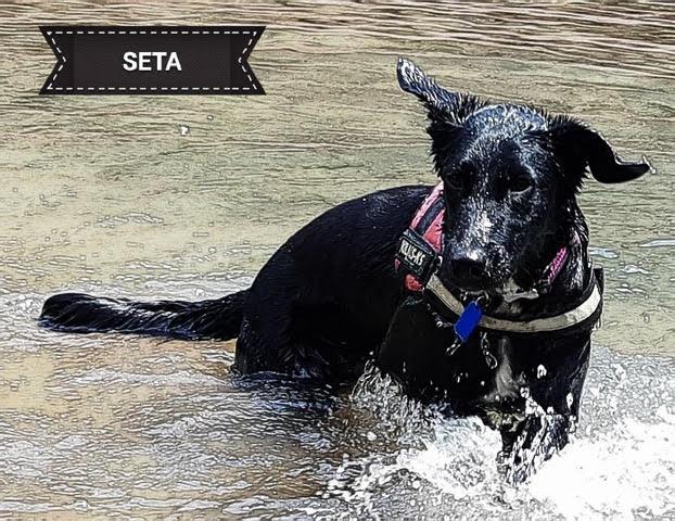 Seta2
