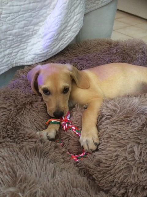 Rocco1